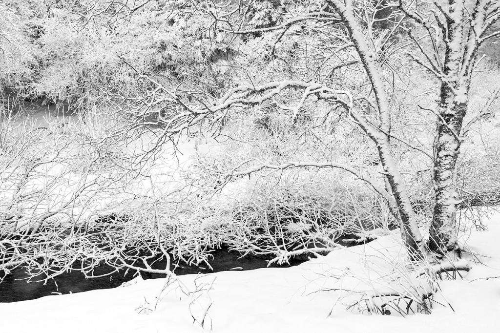 Saupoudré de neige